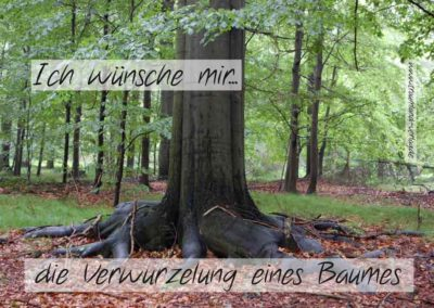 Verwurzelung eines Baumes